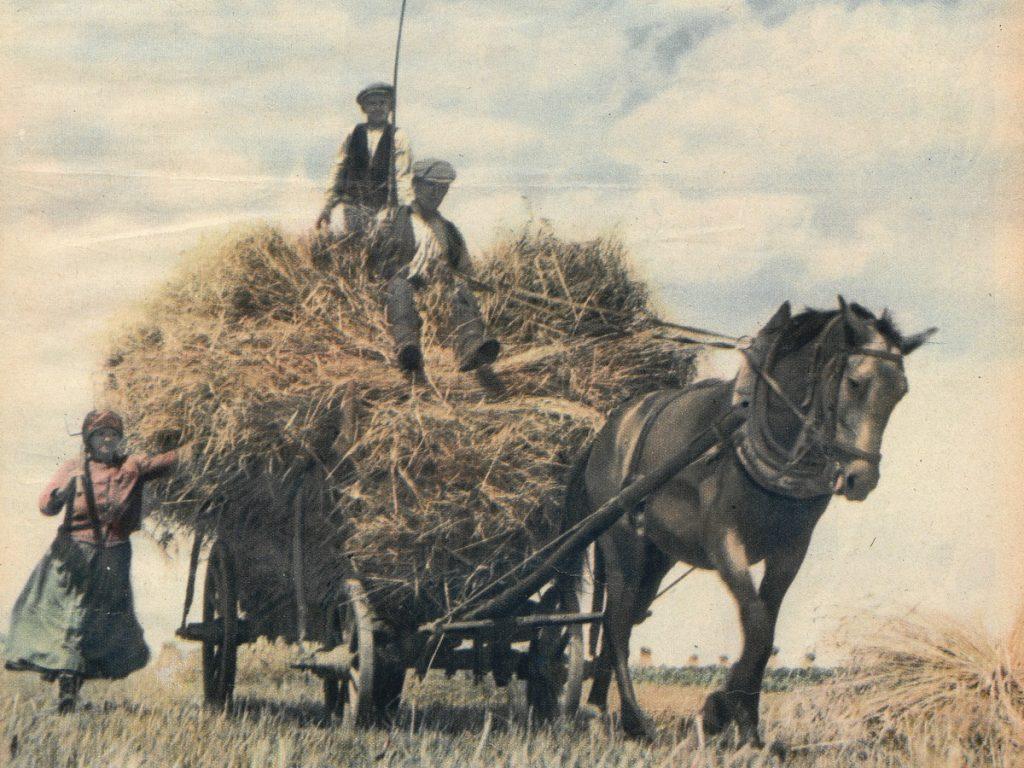 W 1938 roku w Polsce były niemal 4 miliony koni (domena publiczna).