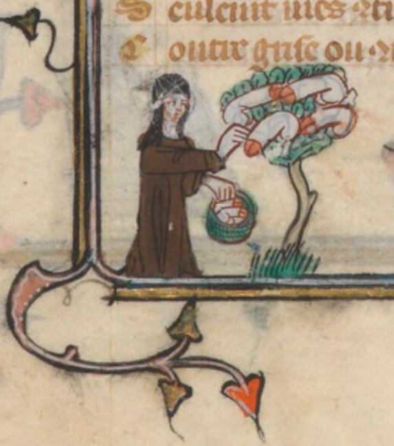 penis w średniowieczu)