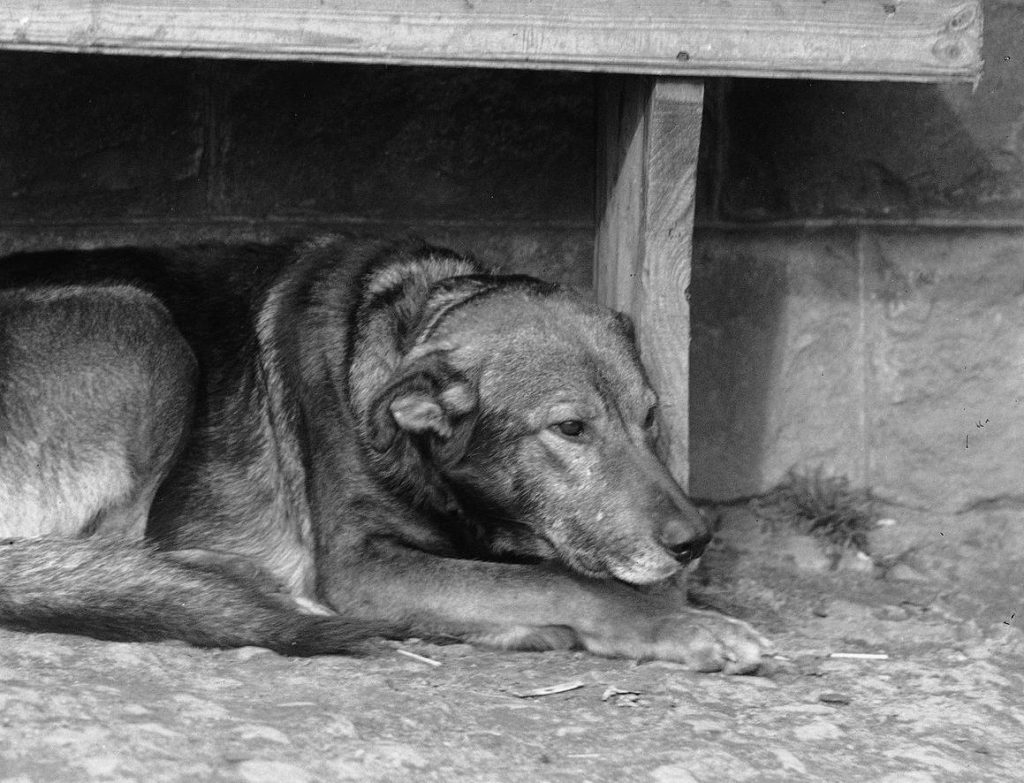 W dotkniętej wielkim kryzysem Polsce na talerzach głodujących lądowały również psy (domena publiczna).