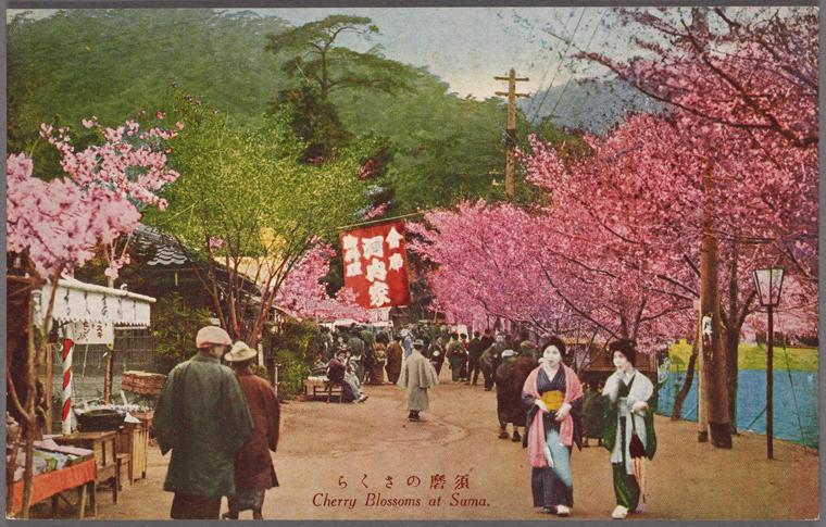 Kwitnące wiśnie na japońskiej pocztówce z pierwszej połowy XX wieku.
