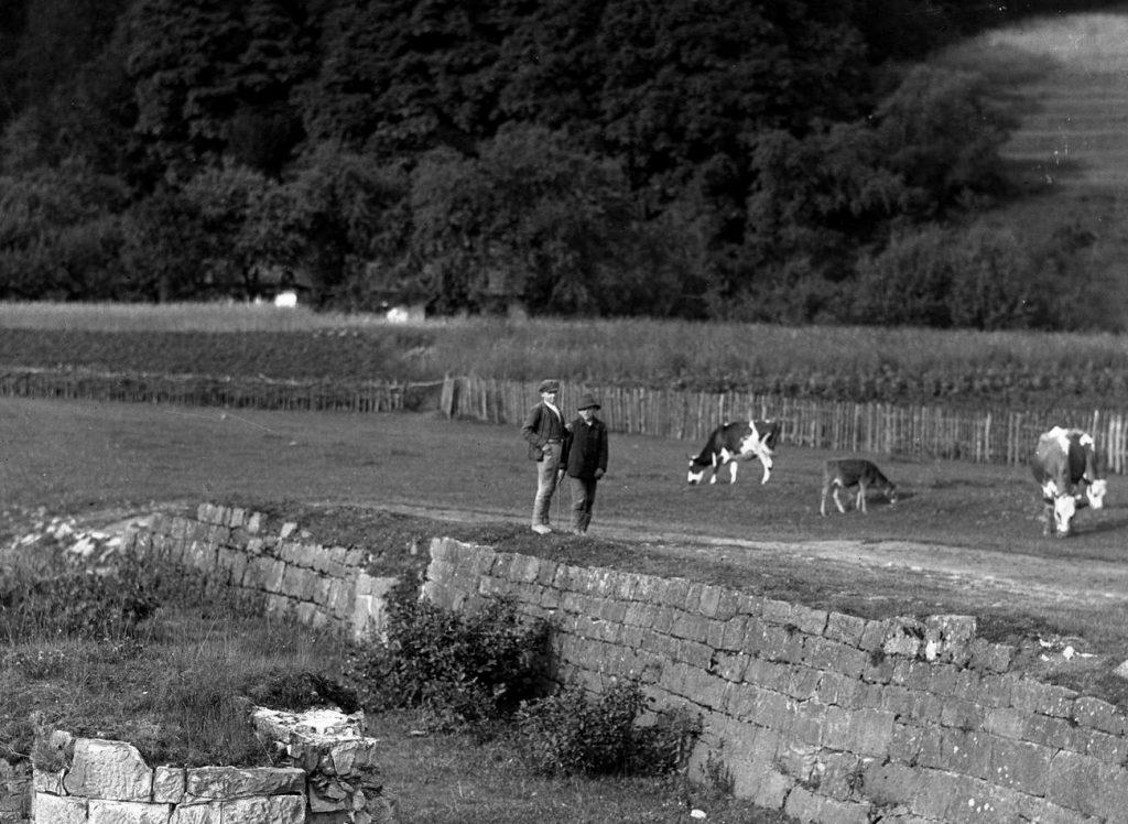 Przed wojną sprawcy szkód polnych byli surowo karani (domena publiczna).
