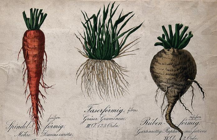 Dieta roślinna w średniowieczu