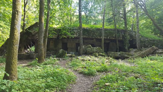 Pozostałości jednego z bunkrów wchodzących w skład Wilczego Szańca