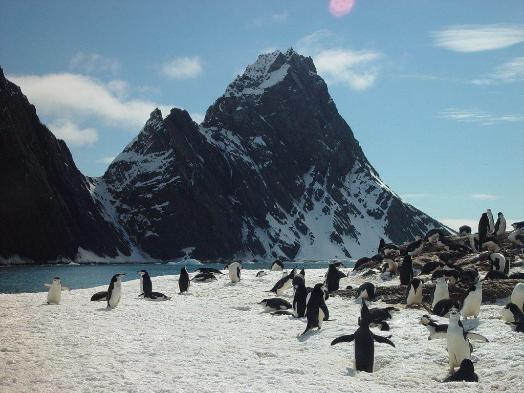 Po zatonięciu Endurance foki oraz pingwiny syały się podstawą jadłospisu członków wyprawy. Zdjęcie poglądowe (Wofratz/CC BY 3.0).