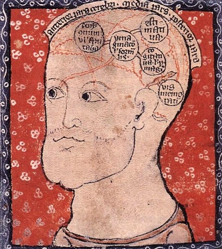Komórki mózgu i ich funkcje według XIII-wiecznej encyklopedii.