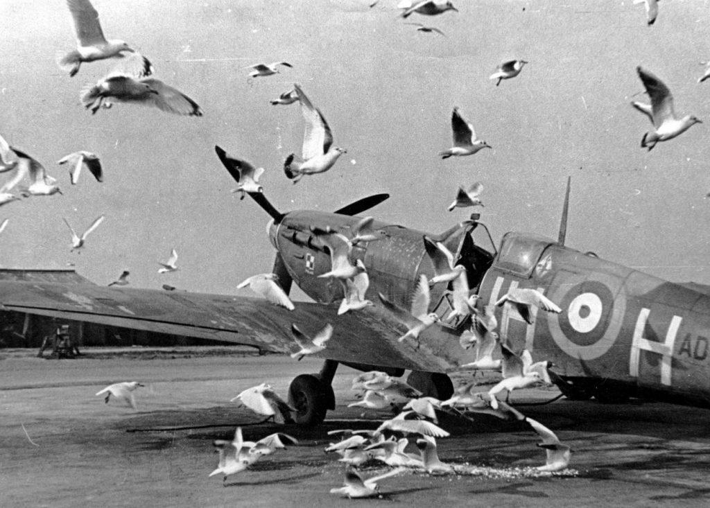 """Spitfire należący do Dywizjonu 317 """"Wileńskiego"""" na jednym z brytyjskich lotnisk (domena publiczna)."""