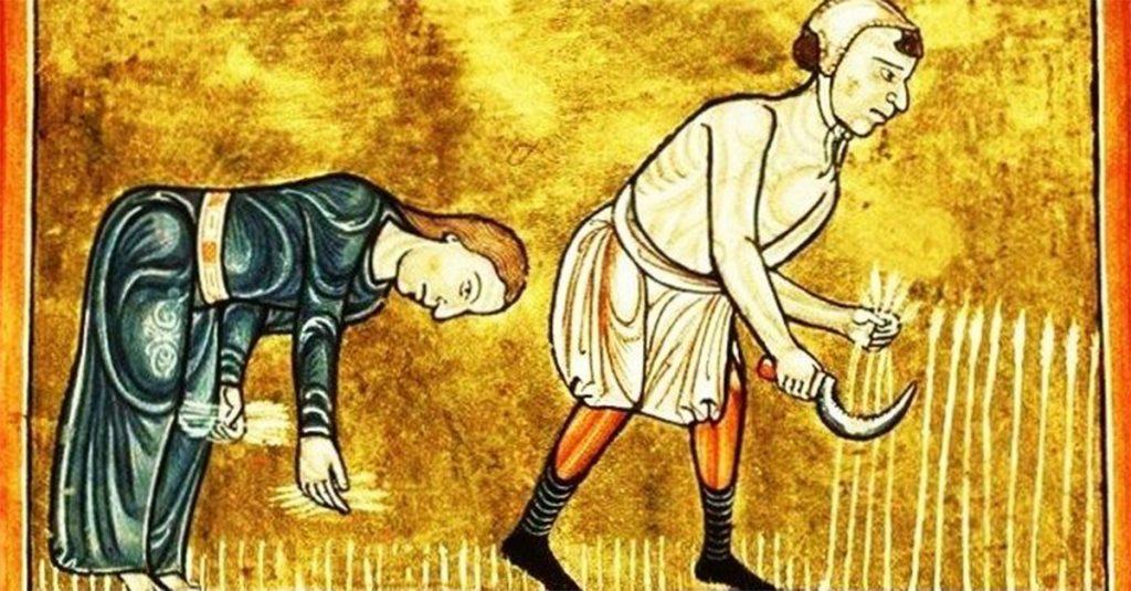 Praca na roli w średniowieczu. Miniatura z epoki.