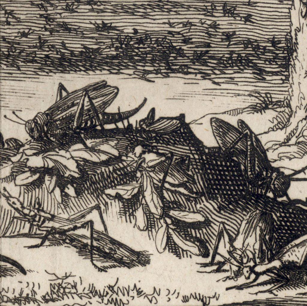 Plaga szarańczy. Rycina Jana Luykena z 1700 roku - 1